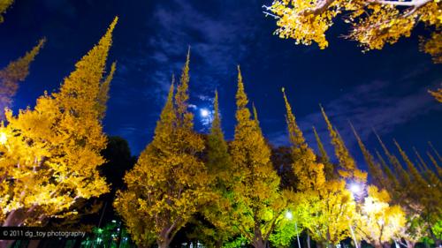 銀杏並木と立待月