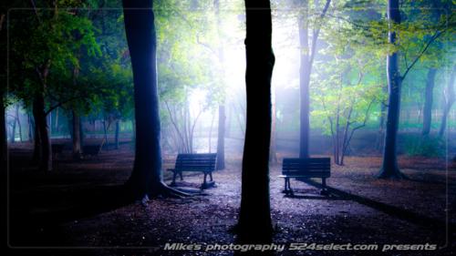 夜霧の公園[芦花公園]