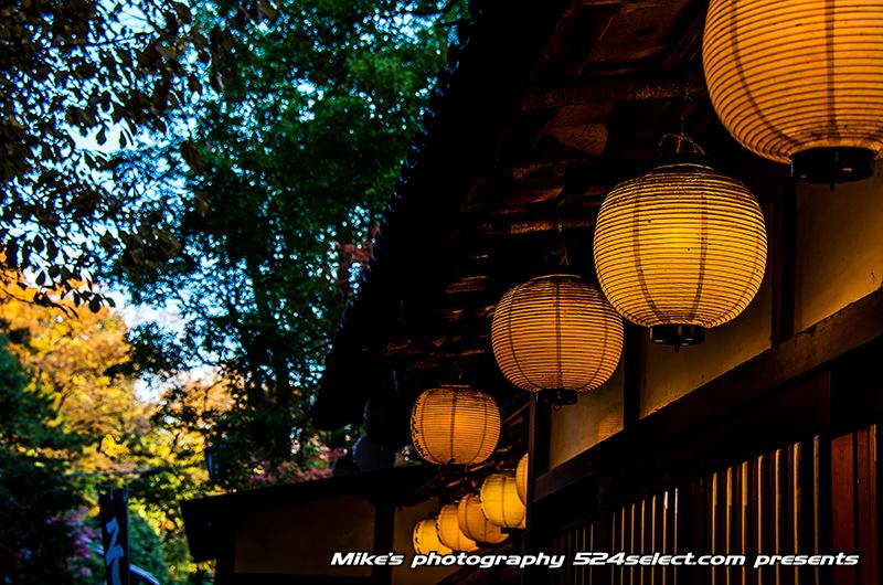 深大寺と神代植物園の紅葉2013〜光と影が美しいもみじの撮影!調布の里は秋の紅葉スポット
