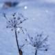 雪景色-冬の華