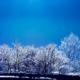 雪景色-霧氷の撮影[霧ヶ峰][Fog deposit-japan]