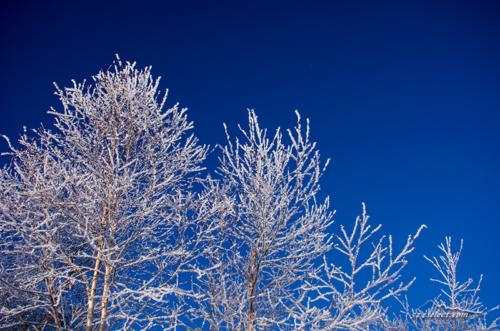 雪景色-霧氷の撮影[霧ヶ峰]