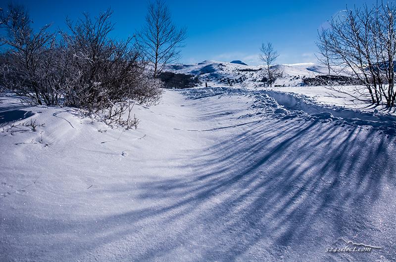 雪原の風景〜長野の冬の高原で一面に広がる雪景色を撮影!木々に積もる雪と青空に映える雪景色