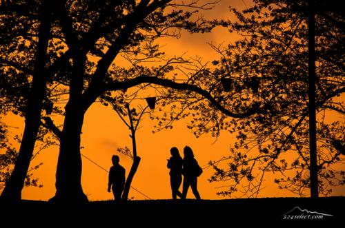 夕暮れ 桜の木の下で[シルエット]