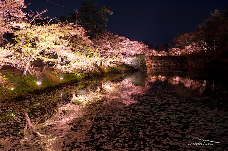ライトアップが美しい!会津鶴ヶ城(会津若松城)夜桜撮影!お堀に映る桜と流れる桜に時を忘れる
