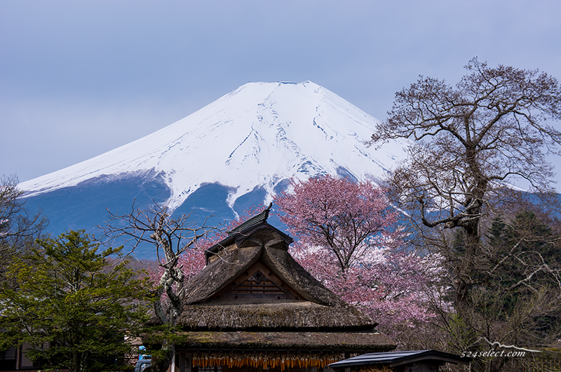 富士山と桜[忍野八海] 2014〜誇るべき日本の風景を!忍野村と富士山の春の風景撮影