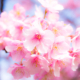 春の写真 桜のある風景を求めて 春の風景写真を撮る為に…