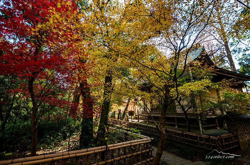 深大寺の紅葉2015〜秋の色彩り豊かに見頃の紅葉期始まる!東京の紅葉の始まり調布市深大寺