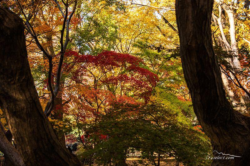 神代植物園の紅葉2015〜一週間遅れの東京の紅葉スポット!見頃の紅葉カエデエリアも落葉はまだ
