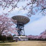 茨城県高萩市さくら宇宙公園〜満開の桜とパラボラアンテナ!高萩市衛星通信記念公園の桜が見事