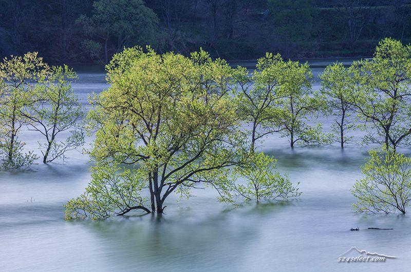 幻想的な水没林〜初夏の山形県の風景から白川ダム湖岸公園!4月〜5月だけの限定風景を撮影