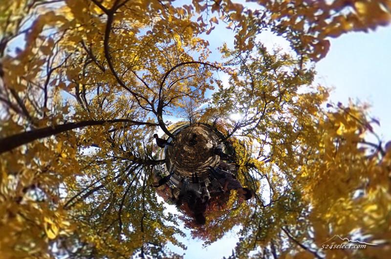 秋の紅葉昭和記念公園の銀杏並木をSHETAで360度撮影!