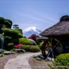春の忍野八海と富士山の風景〜冠雪が残る富士と茅葺屋根の景色!