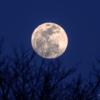 夕暮れの月撮影